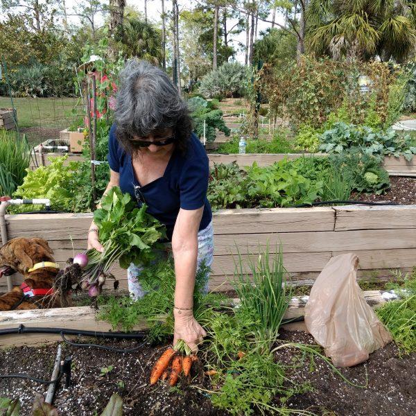 UF-IFAS Master Gardener Program